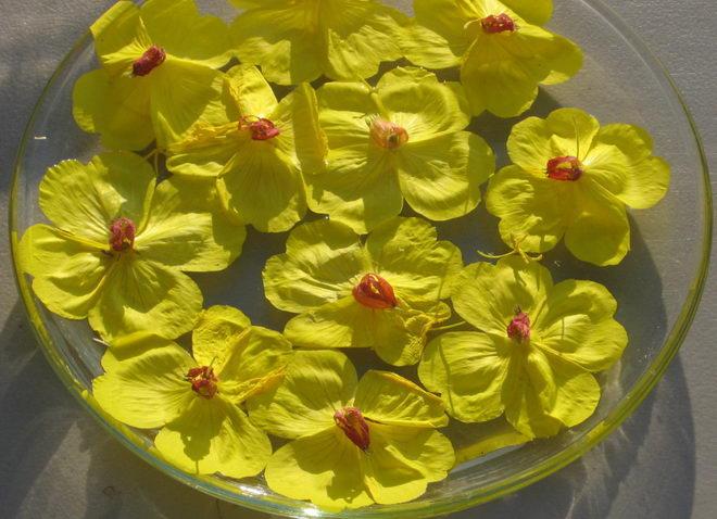 Cvetne esencije nam pomažu da povratimo unutrašnji mir i stabilnost