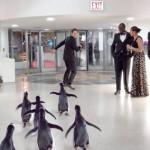 pingvini_mog_tate_07