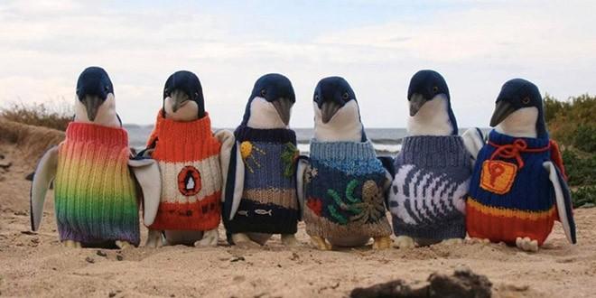 Heroj australijskih pingvina OD HOBIJA DO HUMANOG DELA
