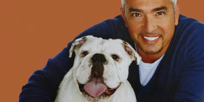 Knjiga koja nas uči da razumemo pse KAKO ODGAJITI SREĆNOG PSA Cezar Milan