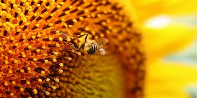 Matični mleč PČELINJE MLEKO ZA BOLJI IMUNITET