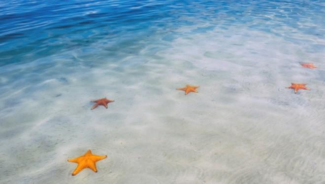 12 Starfis plaza