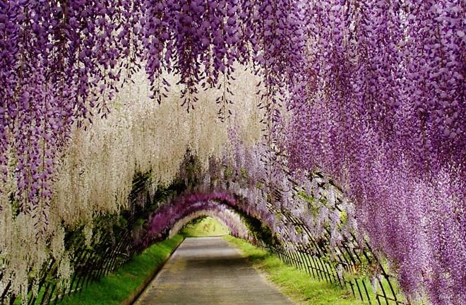 1 cvetni tunel