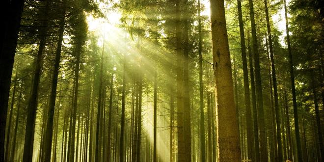 Šume u Srbiji kao zdravstveni potencijal KUPANJE U ŠUMSKOM VAZDUHU