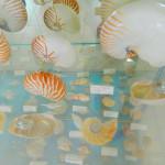 Muzej školjki 5