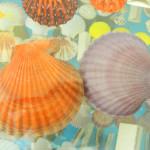 Muzej školjki 11