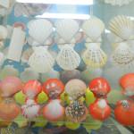 Muzej školjki 14