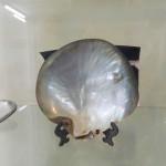 Muzej školjki 15