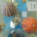 Muzej školjki 17