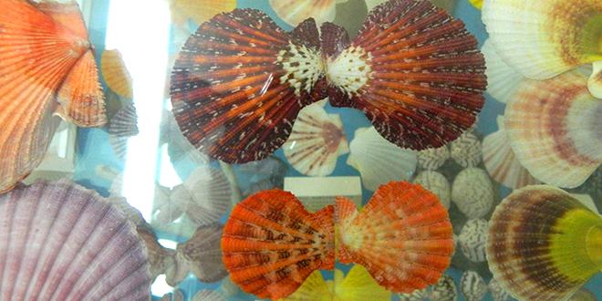 Muzej školjki na Krfu Uživanje u podvodnom svetu