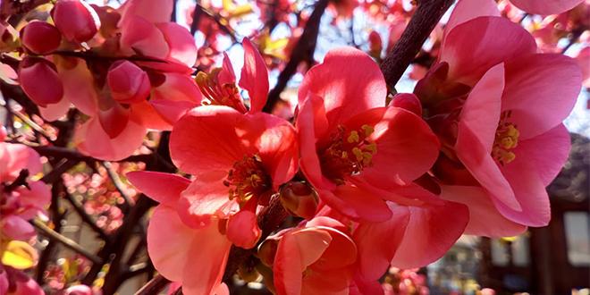 Tehnike samopomoći Naša proleća, leta, jeseni i zime
